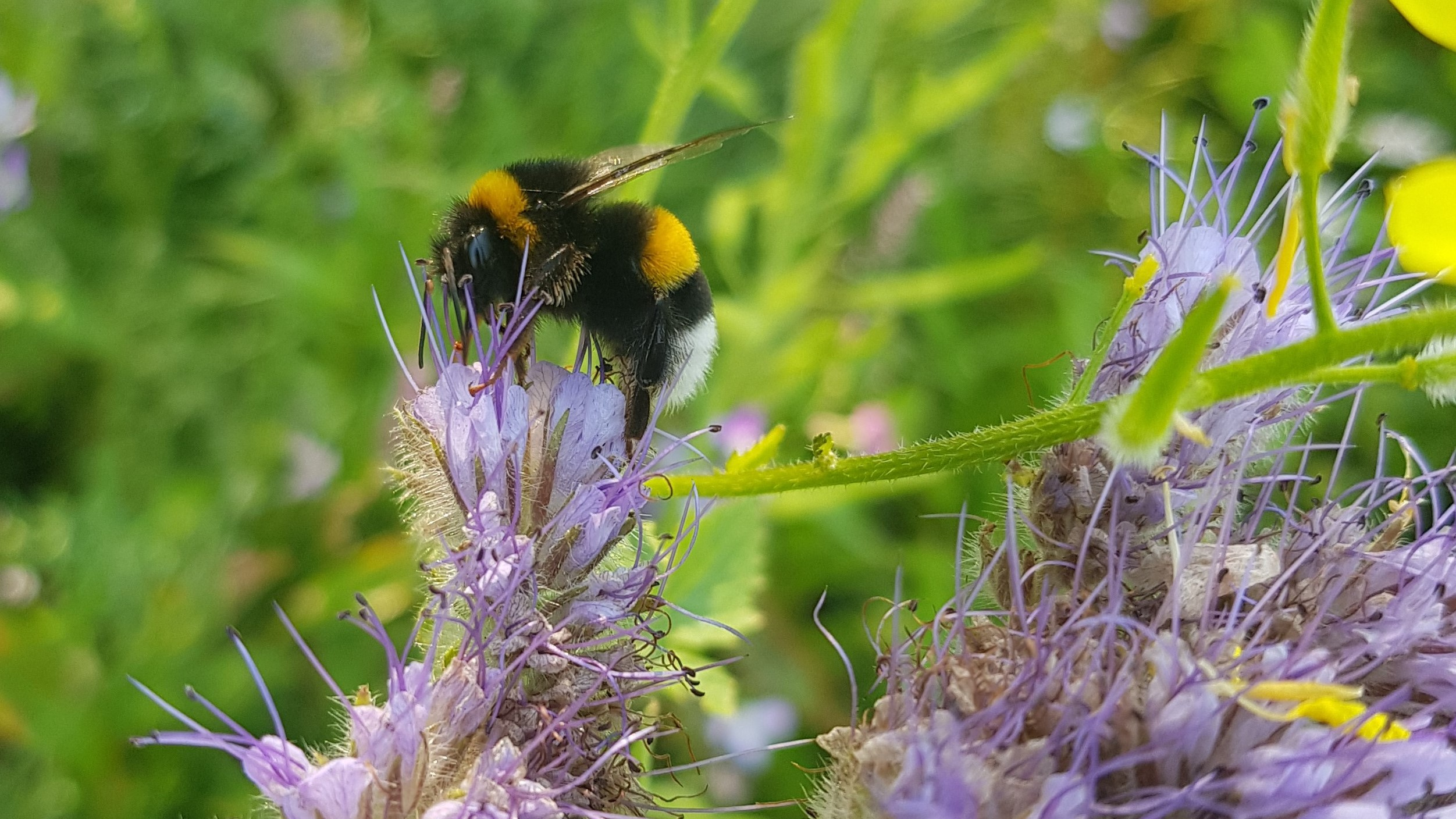 13 juli & 14 juli bijenweekend Friesland